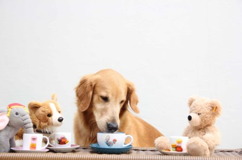 Coolest Pet Cafes Around The World